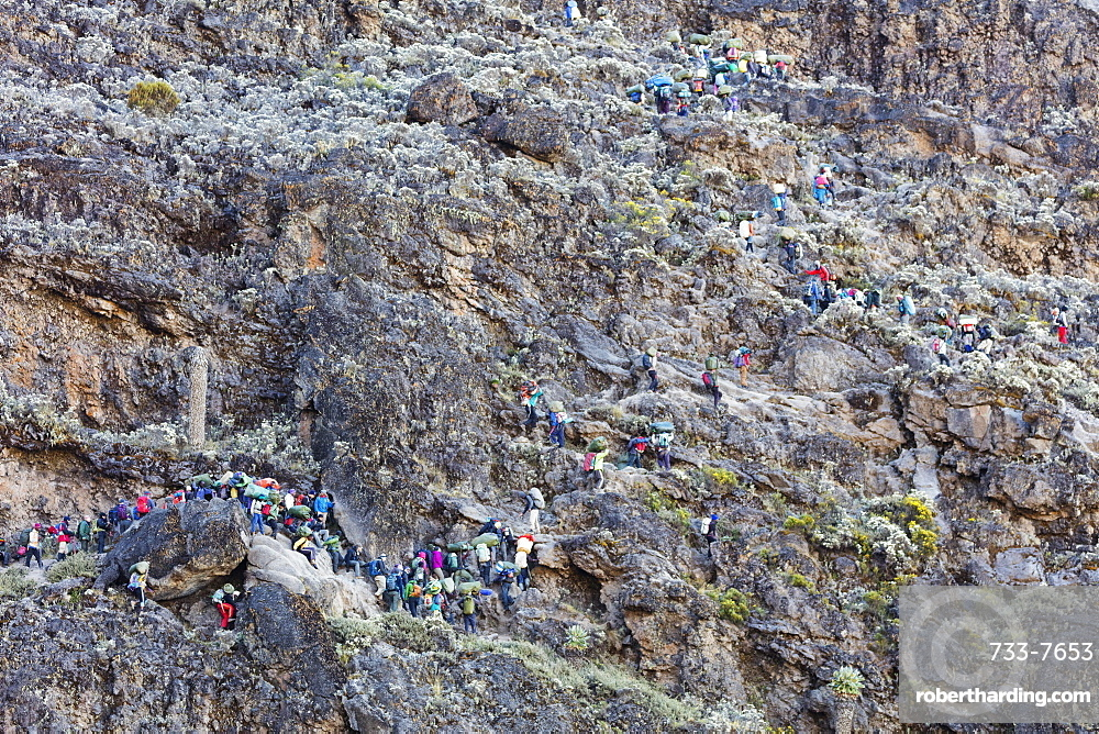 Hikers and porters on Barranco Wall, Kilimanjaro National Park, UNESCO World Heritage Site, Tanzania, East Africa, Africa
