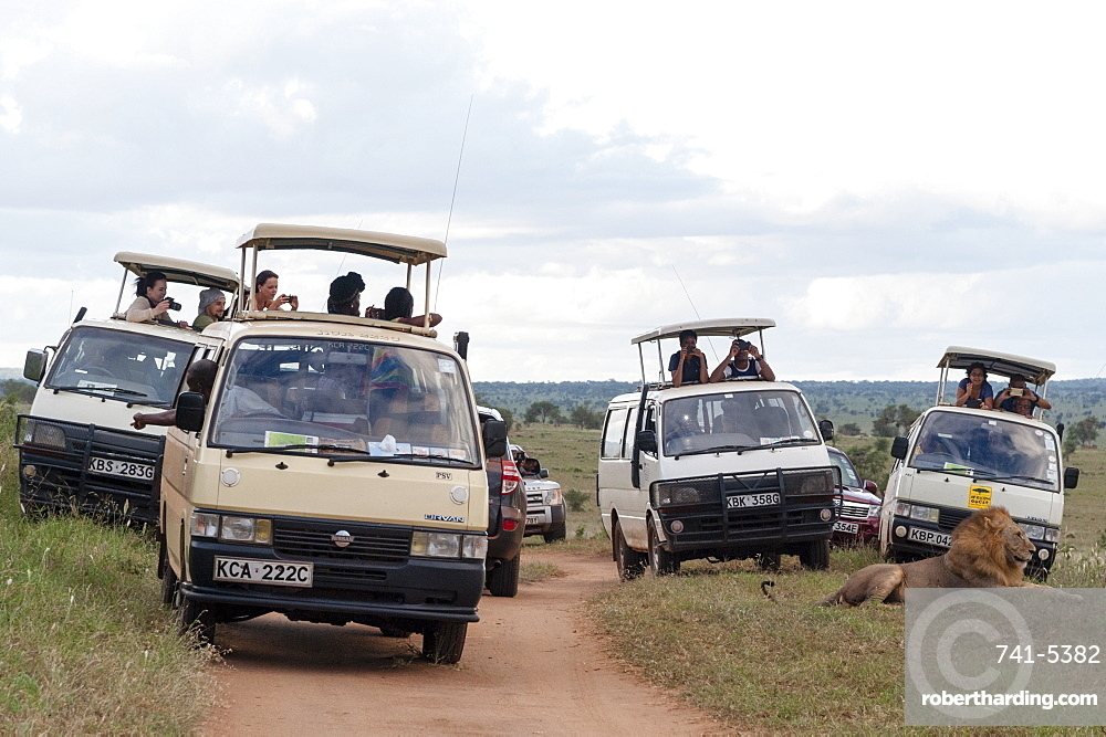 Tourists on minibus taking pictures of a lion (Panthera leo) at close distance with mobile phones, Tsavo, Kenya, East Africa, Africa