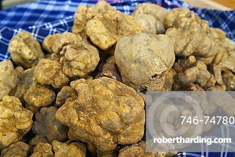 Moncalvo National  Truffle Fair, a batch of  truffles (Tuber magnatum), Asti, Piedmont, Italy, Europe