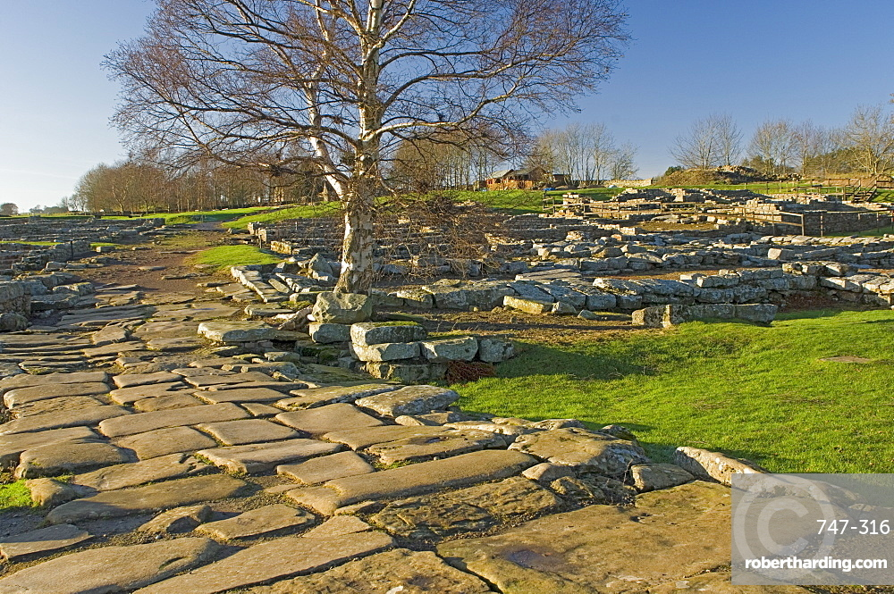 Paved roadway, Via Praetoria, and soldiers quarters, Roman settlement and fort at Vindolanda, Roman Wall south, UNESCO World Heritage Site, Northumbria, England, United Kingdom, Europe