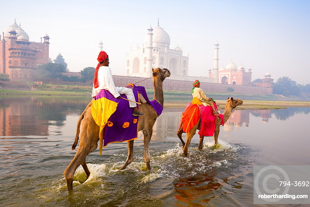Man and boy riding camels in the Yamuna River in front of the Taj Mahal, UNESCO World Heritage Site, Agra, Uttar Pradesh, India, Asia