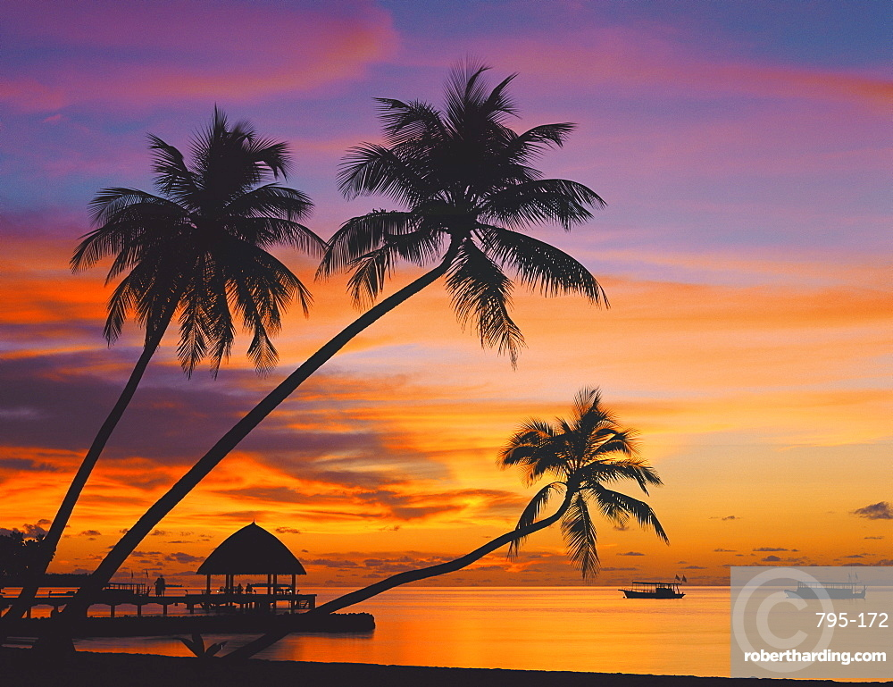 Palm trees and ocean at sunset, Maldives, Indian Ocean, Asia