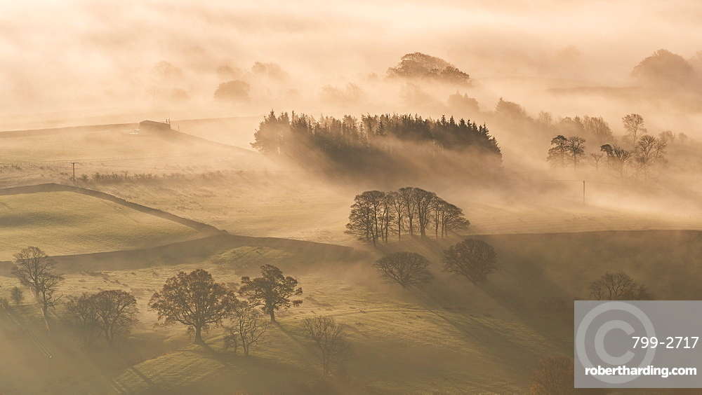 Mist covered rolling countryside at dawn in autumn, Lake District, Cumbria, England, United Kingdom, Europe
