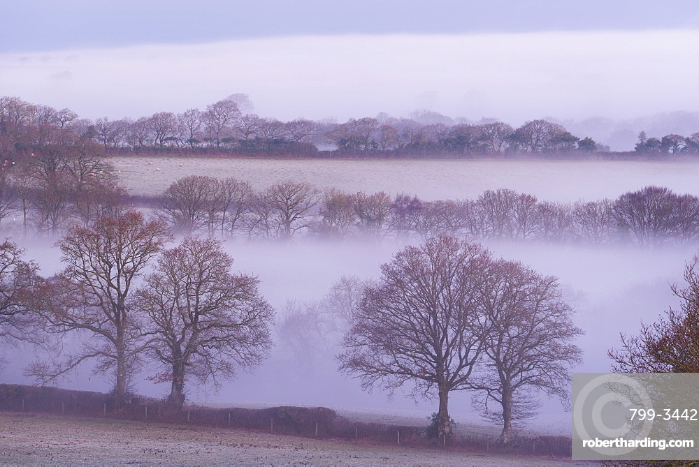 Mist and trees in rural farmland, South Tawton, Devon, England, United Kingdom, Europe