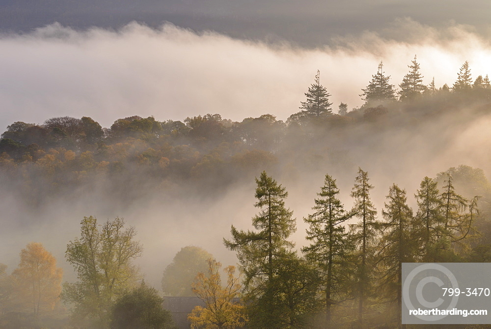 Morning mist floating through Manesty Wood on the banks of Derwent Water, Lake District, Cumbria, England, United Kingdom, Europe