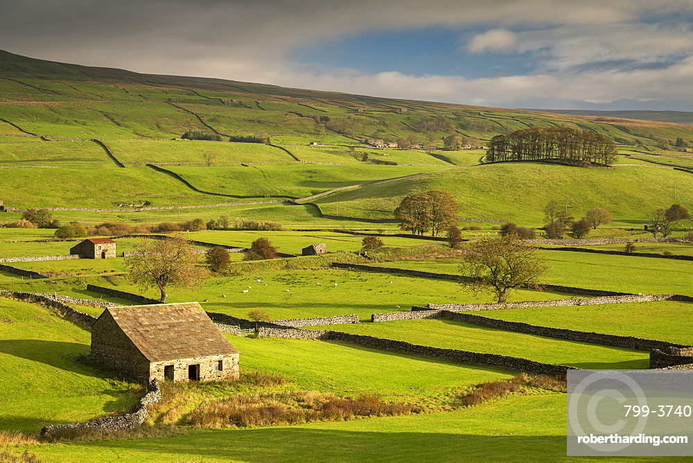 Stone barns and dry stone walls in beautiful Wensleydale in the Yorkshire Dales National Park, Yorkshire, England, United Kingdom, Europe