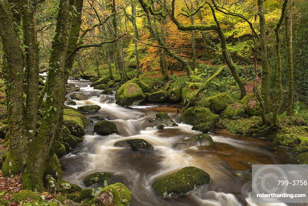 Fast flowing woodland stream, Dartmoor National Park, Devon, England. Autumn (November) 2018.