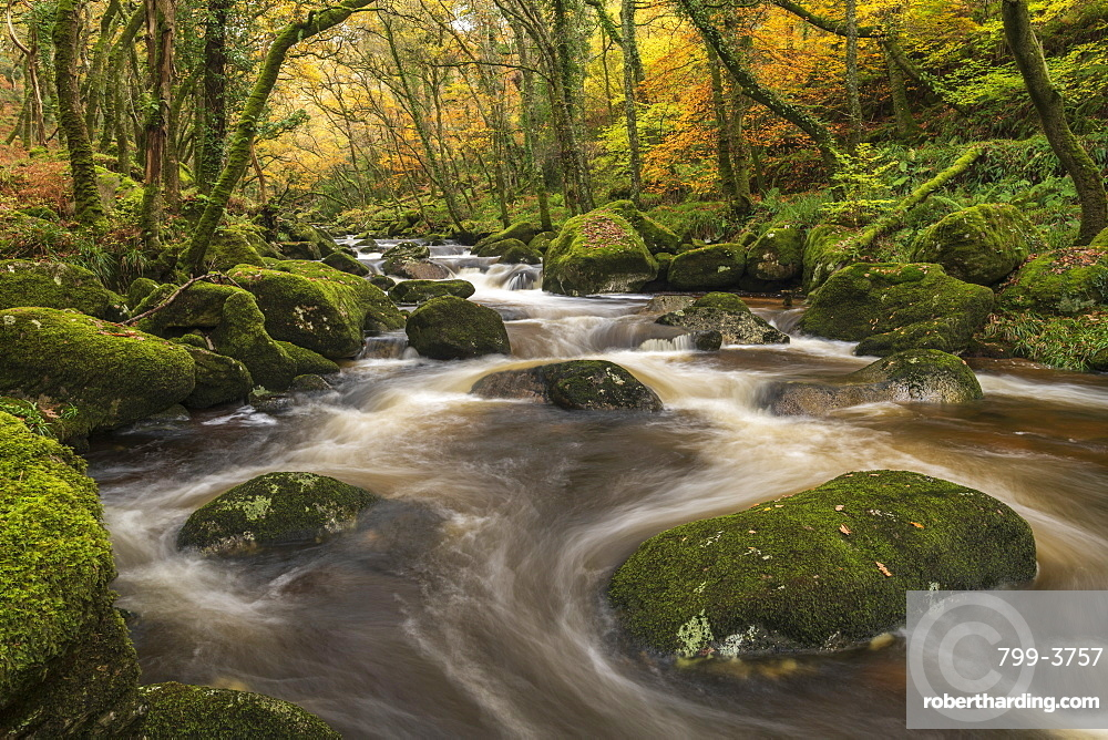 Fast flowing woodland stream in autumn, River Plym, Dartmoor National Park, Devon, England. Autumn (November) 2018.