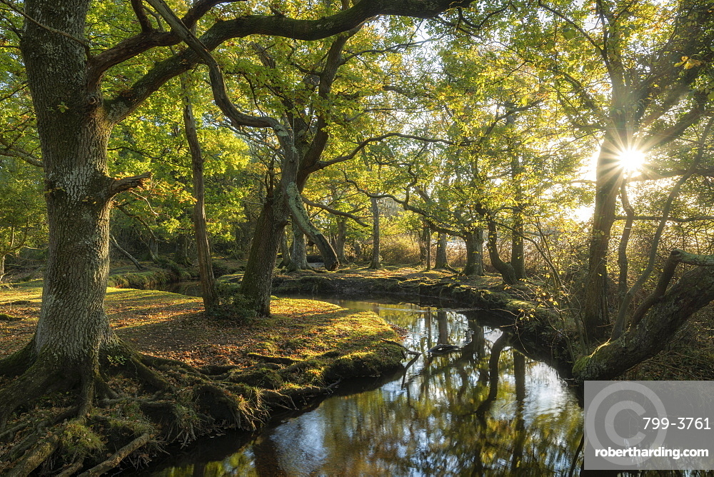 Early morning sunshine penetrates the deciduous woodland surrounding Ober Water near Puttles Bridge in the New Forest National Park, Hampshire, England. Autumn (November) 2018.