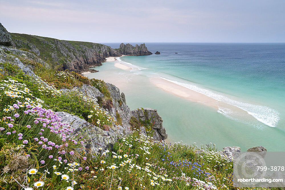 Wildflowers on the cliffs above Pednvounder Beach and Logan Rock, Cornwall, England. Spring (May) 2018.