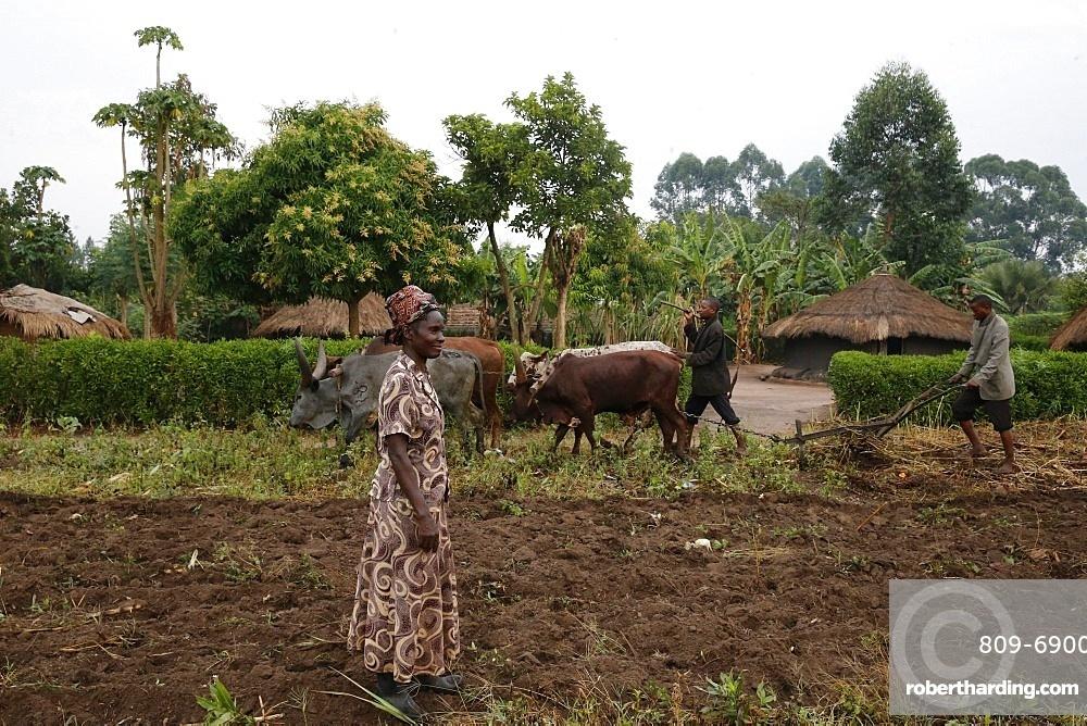Symphoroza Bujune bought oxen with a 500000 UGS group loan from Kolping Uganda Society, Uganda, Africa