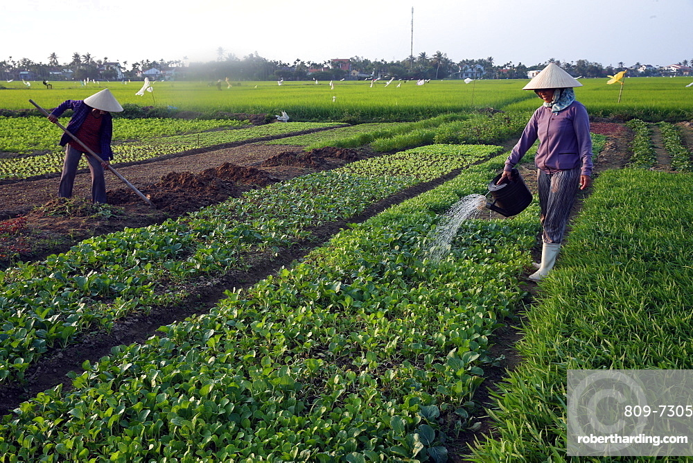 A farmer waters her vegetable farm, Hoi An, Vietnam, Indochina, Southeast Asia, Asia