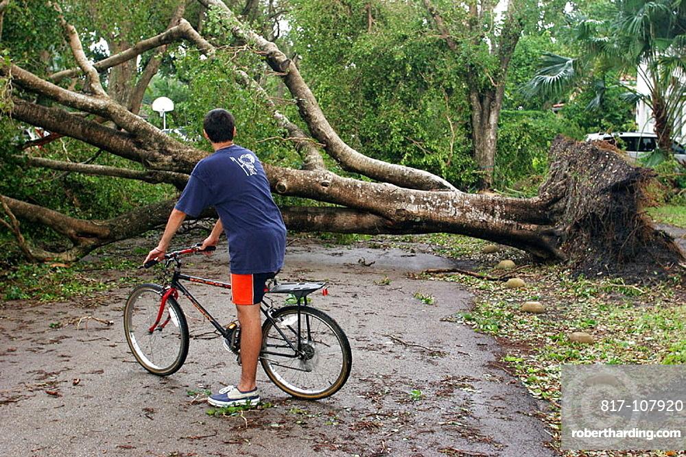Hurricane Katrina damage, fallen tree, Hispanic male teen, bicycle, blocked neighborhood street, Coral Gables, Florida, USA