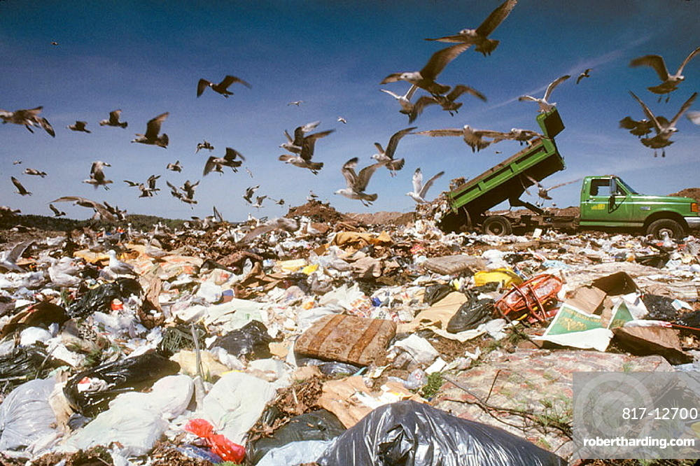 Garbage dump with seagulls and truck, New Haven, Connecticut, USA