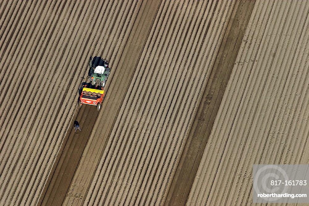 Tractor on the potato field, spring time, Skv•ne, Sweden
