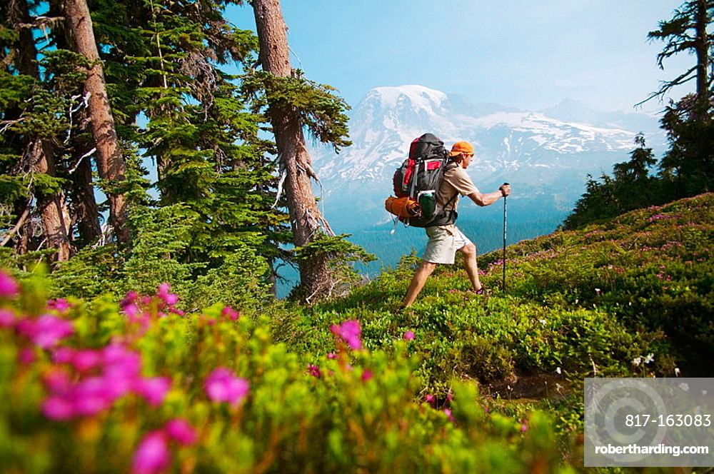 A man hiking through flowers in the Tatoosh range near Mount Rainier, WA.