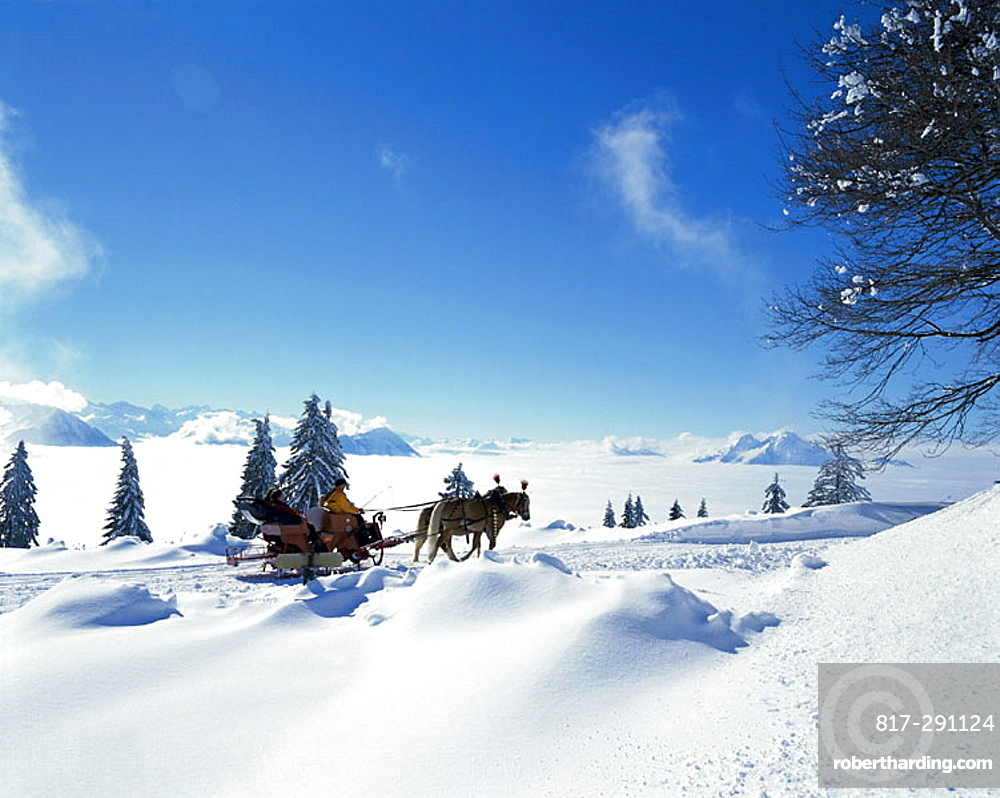 10449638, coach, sledge, sleigh, horses, tourism, mountains, scenery, Lucerne, horse sledge, Rigi, Switzerland, Europe, winter. 10449638, coach, sledge, sleigh, horses, tourism, mountains, scenery, Lucerne, horse sledge, Rigi, Switzerland, Europe, winter