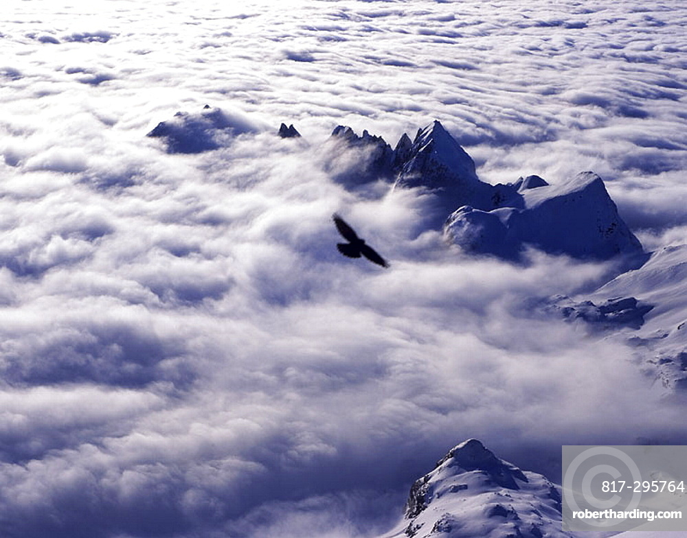 scenery, landscape, View, from Santis, Alpstein, sea of fog, bird, alpine chough, mountains, Alps, snow, winter, Easte. scenery, landscape, View, from Santis, Alpstein, sea of fog, bird, alpine chough, mountains, Alps, snow, winter, Easte