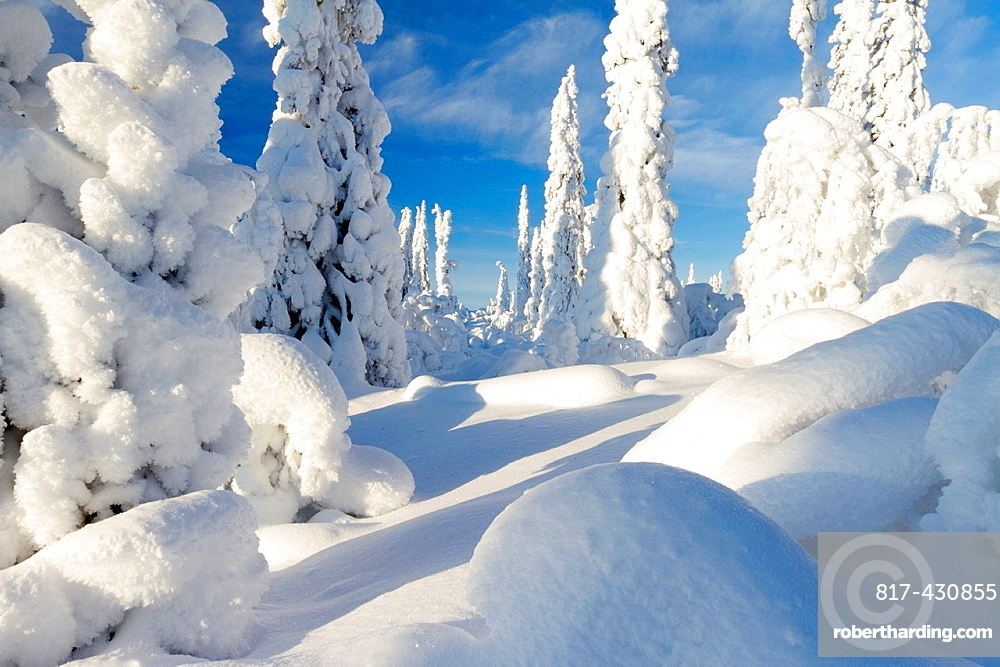 Sunny winter landscape with a lot of snow on spruces in swedish lapland