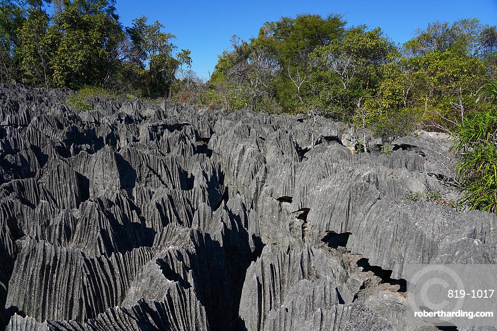 Small Tsingy, Tsingy de Bemaraha National Park, UNESCO World Heritage Site, Melaky Region, Western Madagascar, Africa