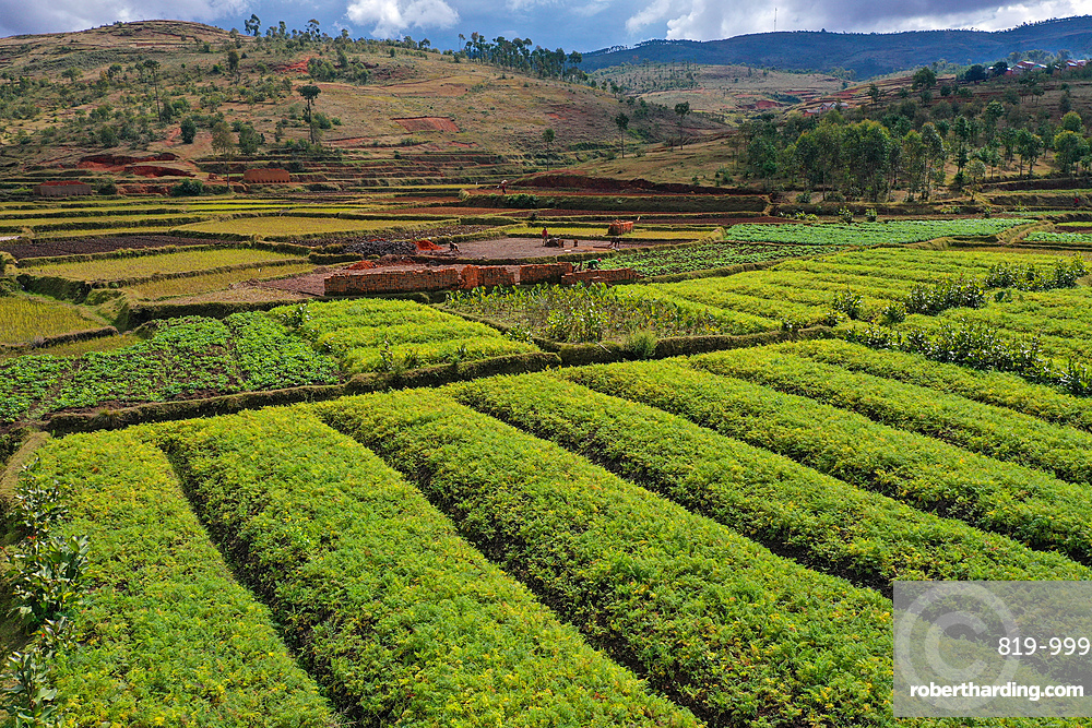 Vegetable cultivation and brick making on the rice fields, National Route RN7 between Antsirabe and Antananarivo, Madagascar, Africa