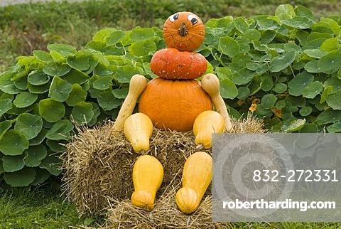 Figure made of Pumpkins (Cucurbita), Upper austria, Europe
