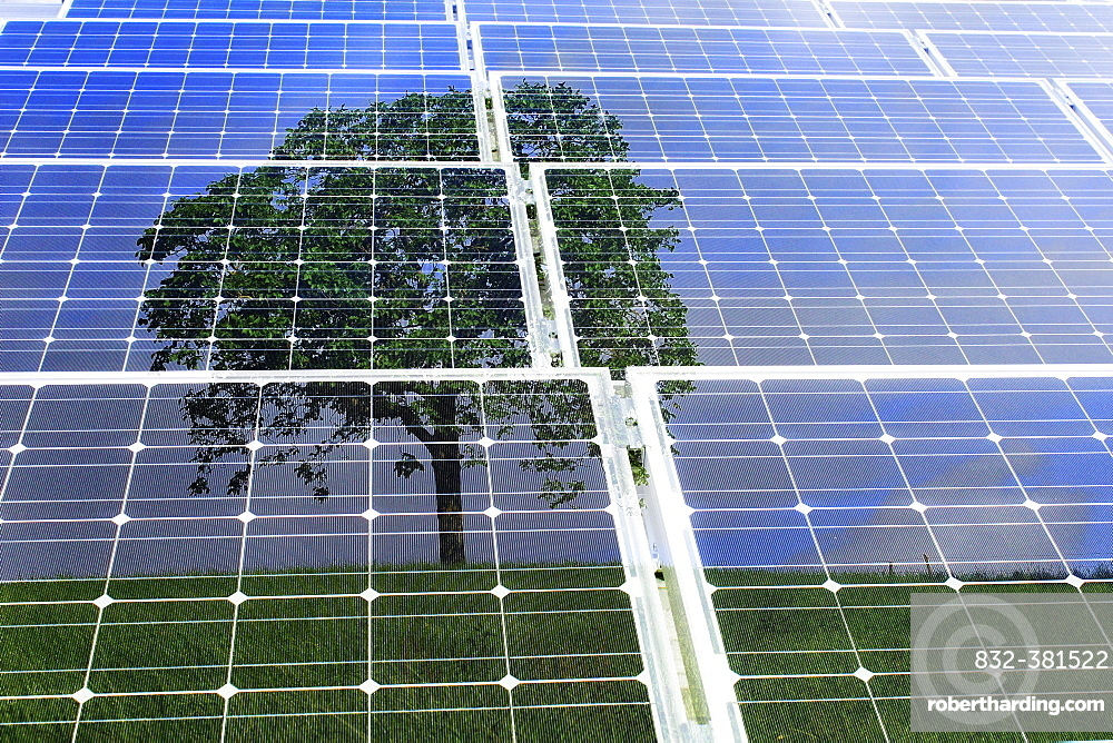 Solar panels with the reflection of a tree, illustration, symbolic image