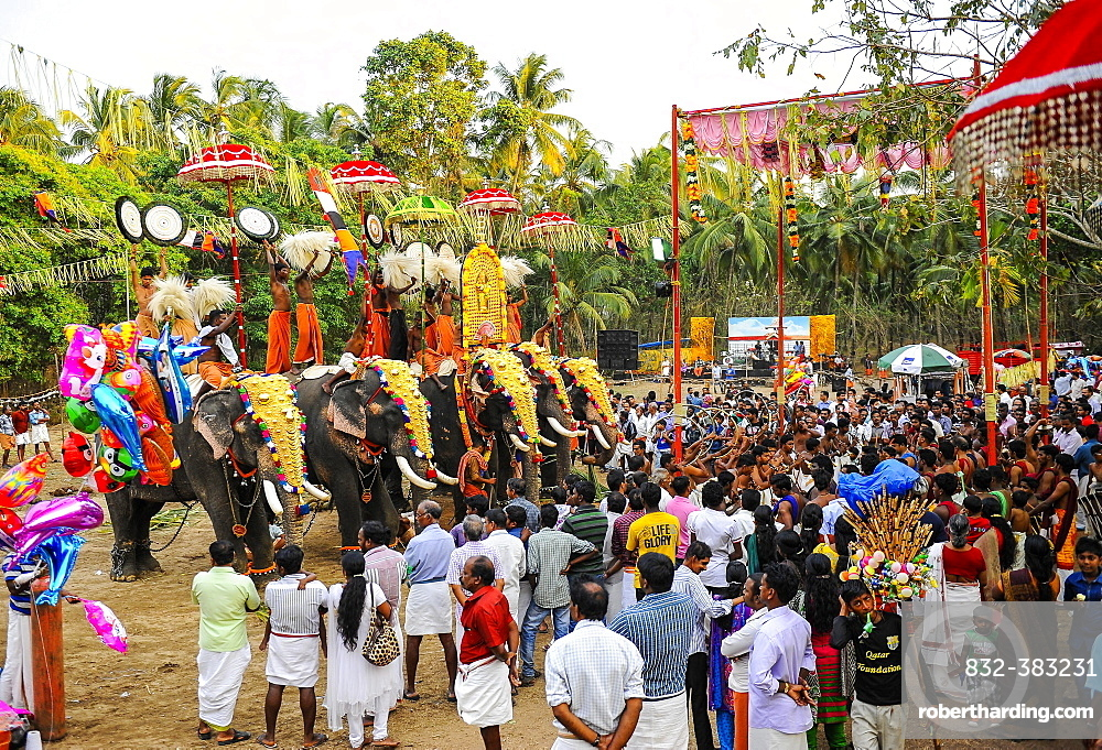 Hindu temple festival with many elephants, Thrissur, Kerala, South India, India, Asia