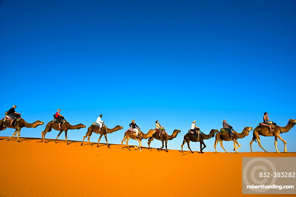 Tourists riding camels on the sand dunes of Erg Chebbi, Sahara Desert, Southern Morocco, Morocco, Africa
