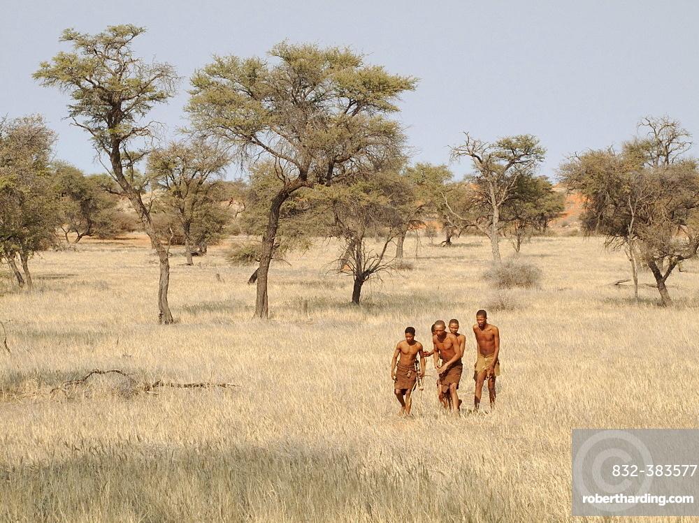Bushmen in the Kalahari Desert, Camelthorn trees (Acacia erioloba) at the back, Intu Afrika Kalahari Game Reserve, Namibia, Africa