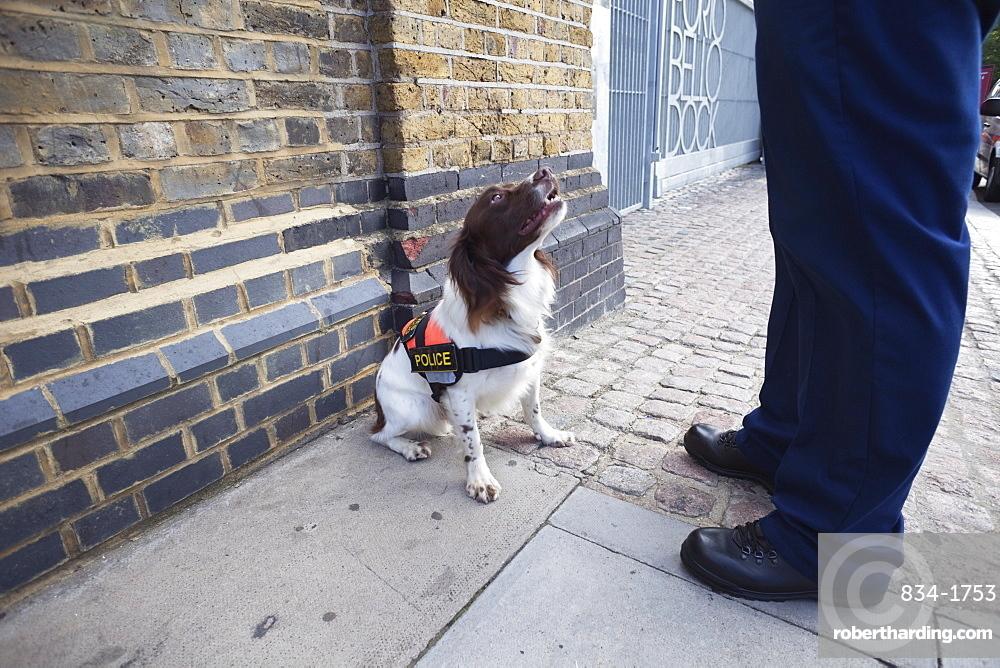 Explosive Search Dog, London, England, United Kingdom, Europe