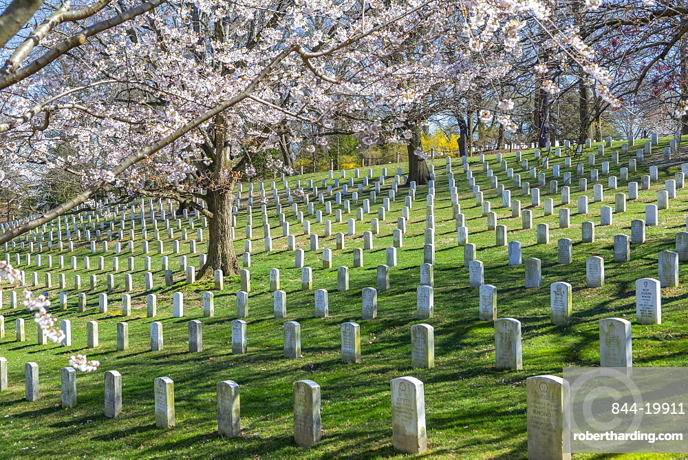 View of gravestones in Arlington National Cemetery in springtime, Washington DC, District of Columbia, United States of America