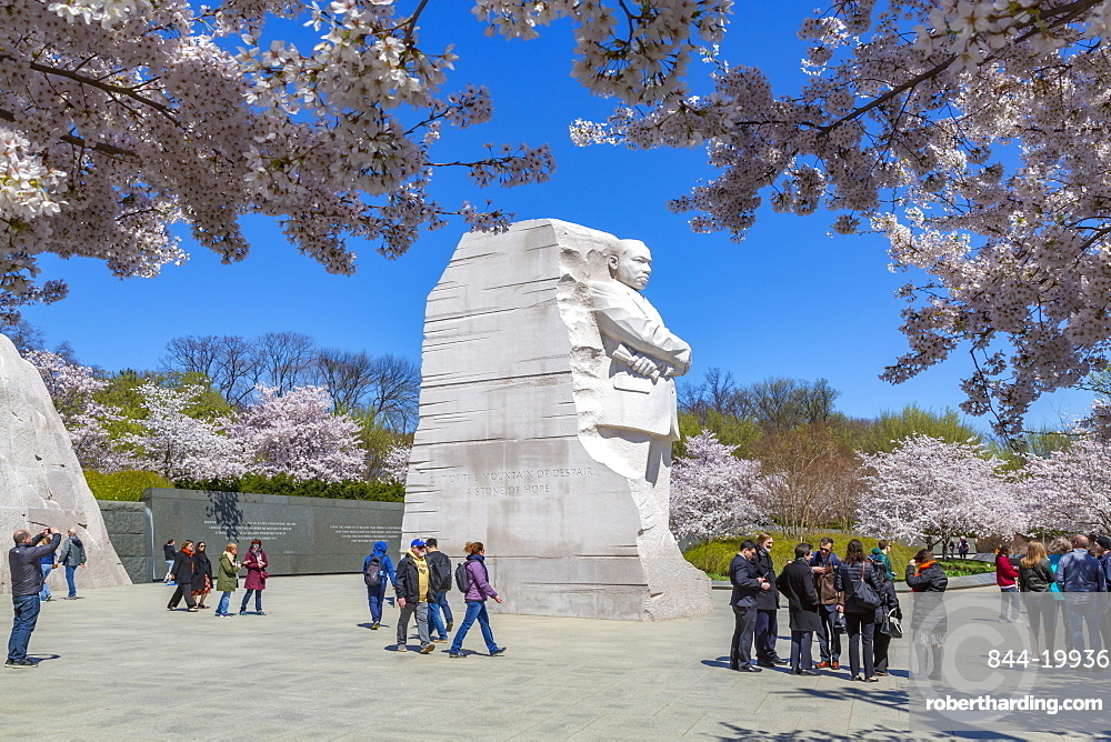 View of the Martin Luther King, Jr. Memorial and cherry blossom trees in Spring, Washington D.C., United States of America, North America
