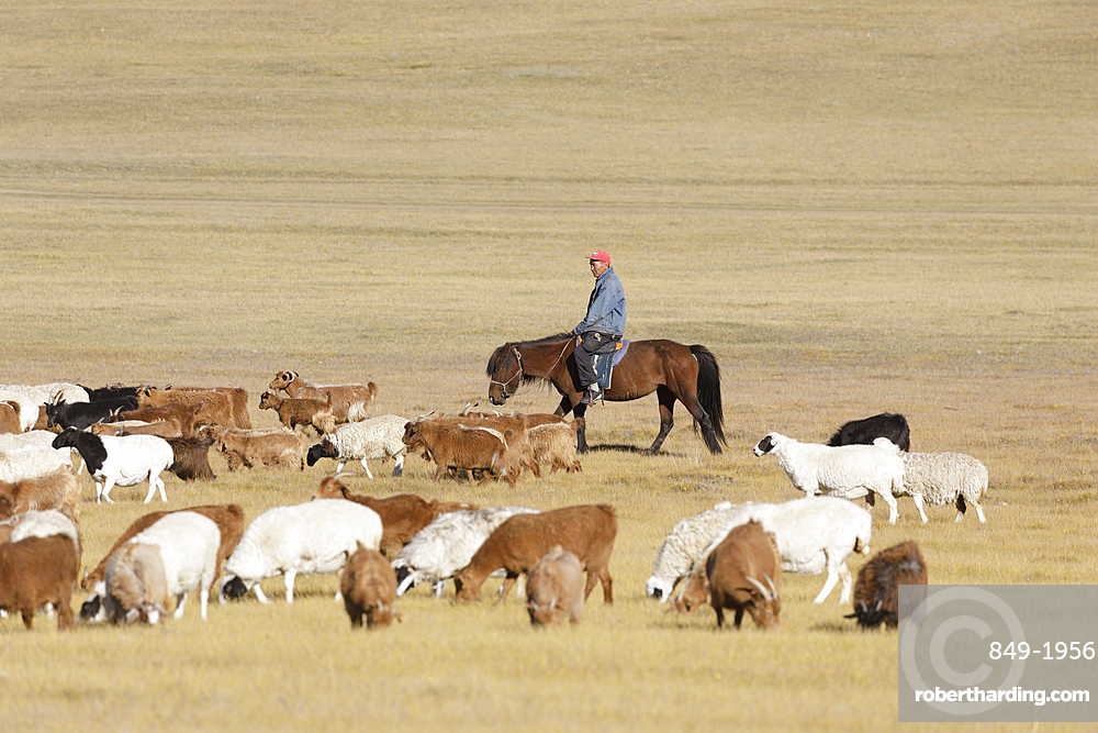 A Mongolian herder in the Steppe of Mongolia, Central Asia, Asia