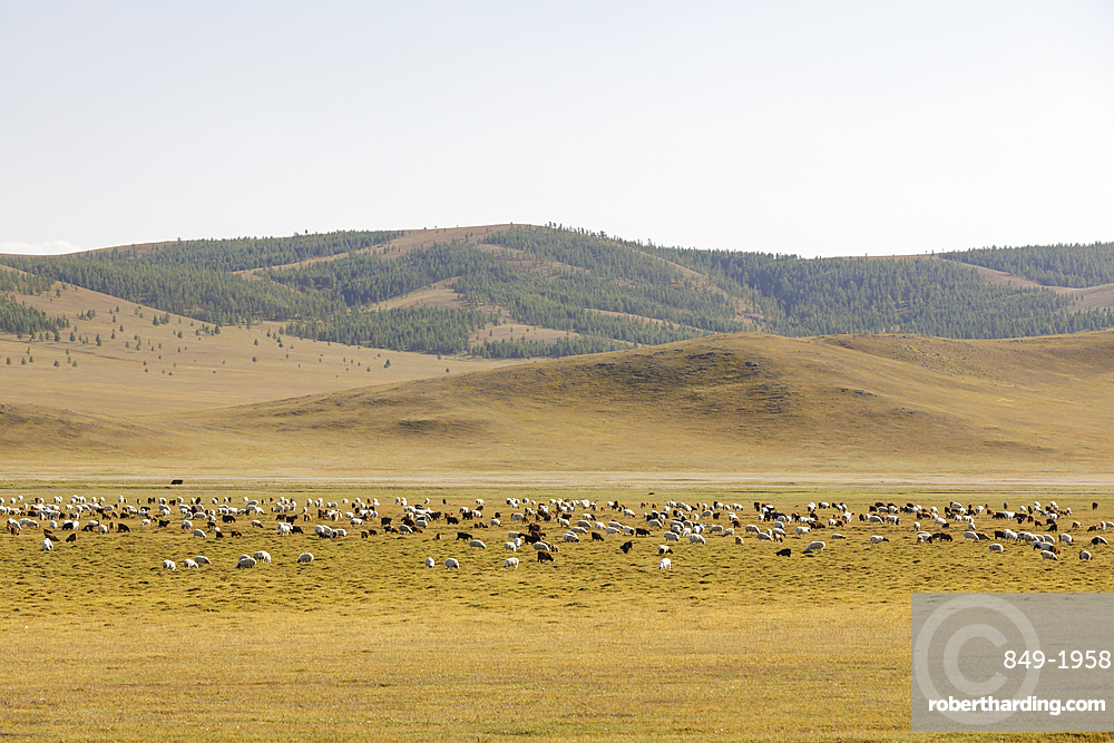 The vast landscapes of Khentii Province in Mongolia, Central Asia, Asia