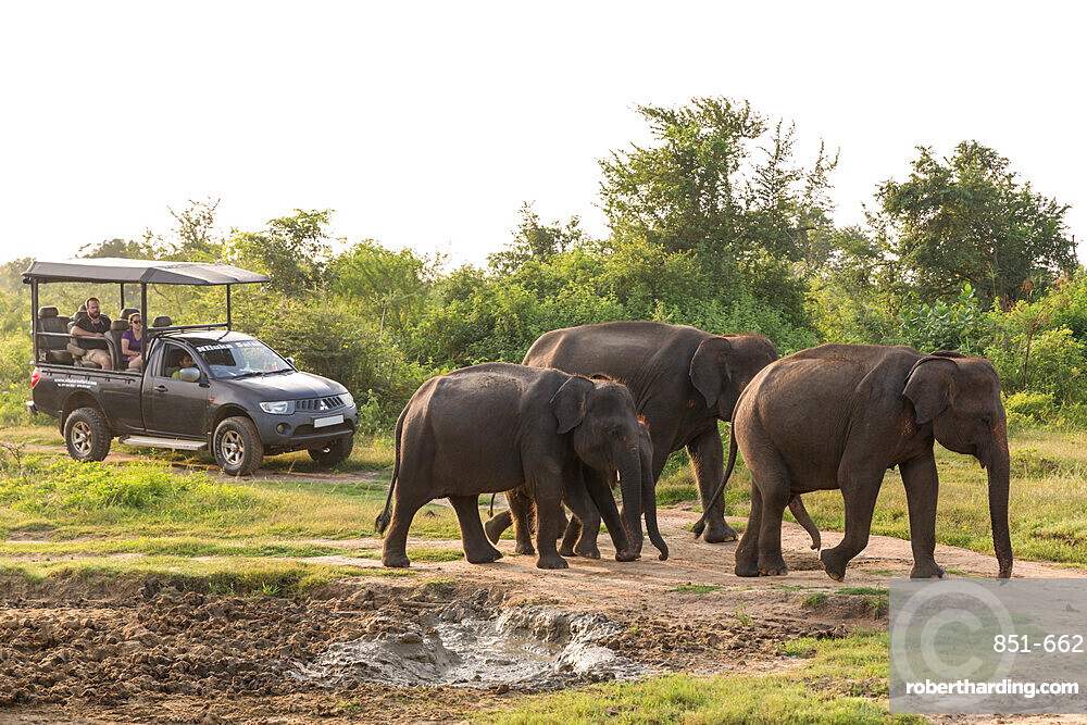 Tourists in a 4x4 watching a group of Asian elephants in Udawalawe National Park, Sri Lanka