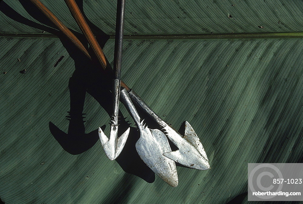 Three Pygmy arrows lay on a palm leaf in Ngodi Ngodi. The pointed arrows were constructed out of metal and wood.