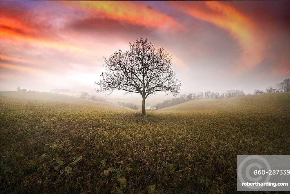 Walnut tree between the hills, Langhirano, Emilia-Romagna, italy