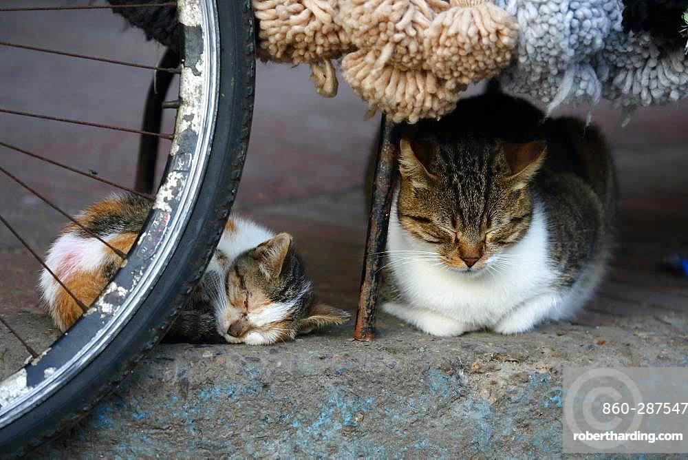 Cat and kitten sleeping on a sidewalk, Essaouira, Morocco