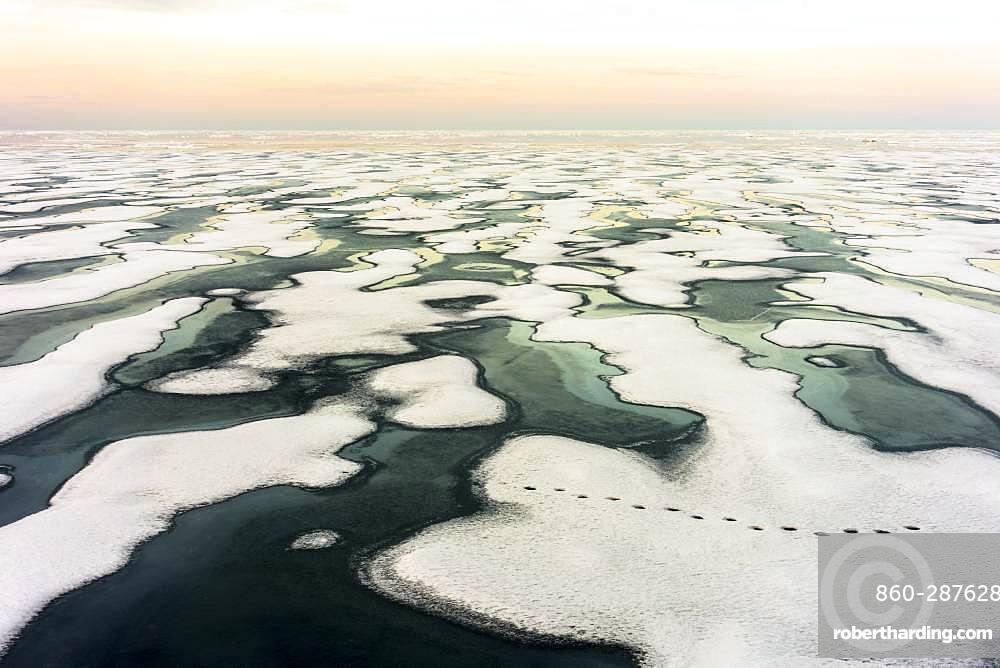 Ice breakup, where a polar bear (Ursus maritimus) passed recently ... Canada