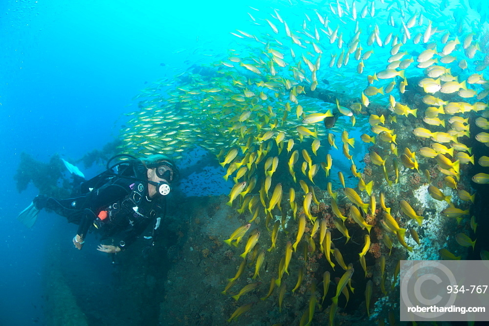 Diver swimming amongst the schooling fish on a ship wreck in Nosy Be.