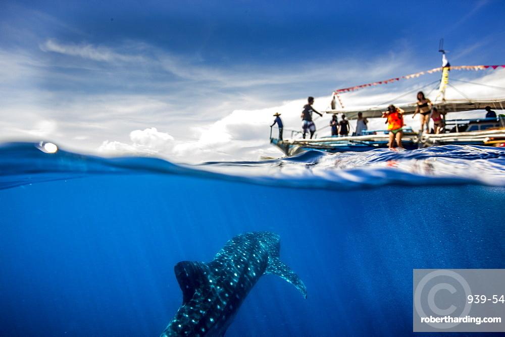 Whale shark (Rhincodon typus) beneath a banca tour boat in Honda Bay, Palawan, The Philippines, Southeast Asia, Asia