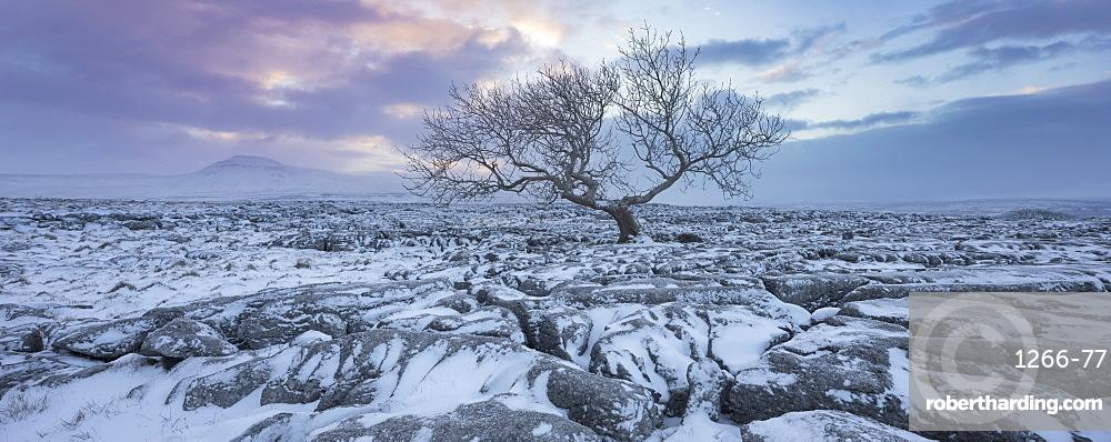 View to Ingleborough Hill from Twisleton Scar at sunrise in winter, Ingleton, Yorkshire Dales National Park, North Yorkshire, Yorkshire, England, United Kingdom, Europe