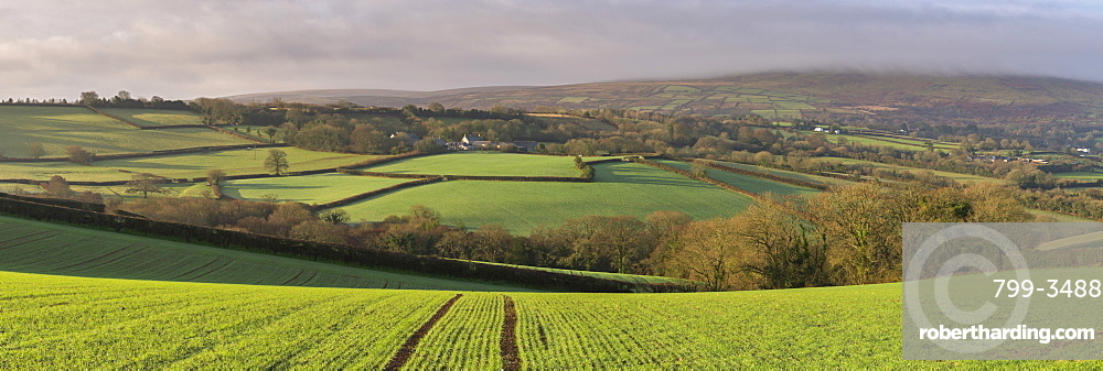 Rolling farmland near South Tawton in winter, Dartmoor National Park, Devon, England, United Kingdom, Europe