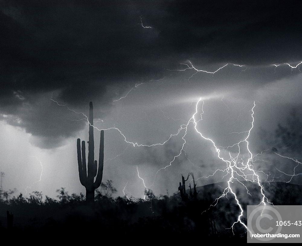 Living In Fear, Lightning; Sahuaro Cactus; Arizona