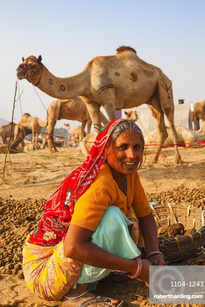 Woman collecting camel droppings to use as fuel, Pushkar Camel Fair, Pushkar, Rajasthan, India, Asia