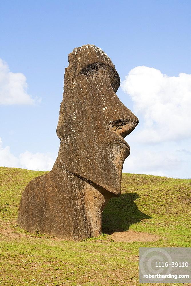 Moai By The Quarry On The Outer Slope Of The Rano Raraku Volcano, Rapa Nui (Easter Island), Chile