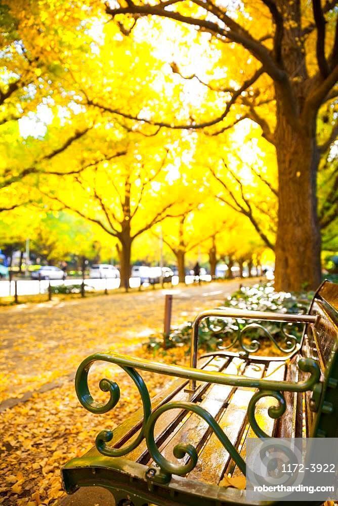 Autumn colors in Tokyo, Japan