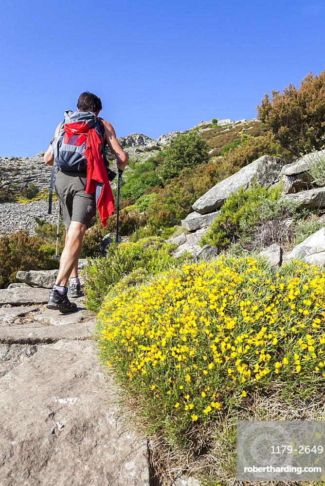 Hiker on path towards Monte Capanne, Elba Island, Livorno Province, Tuscany, Italy, Europe