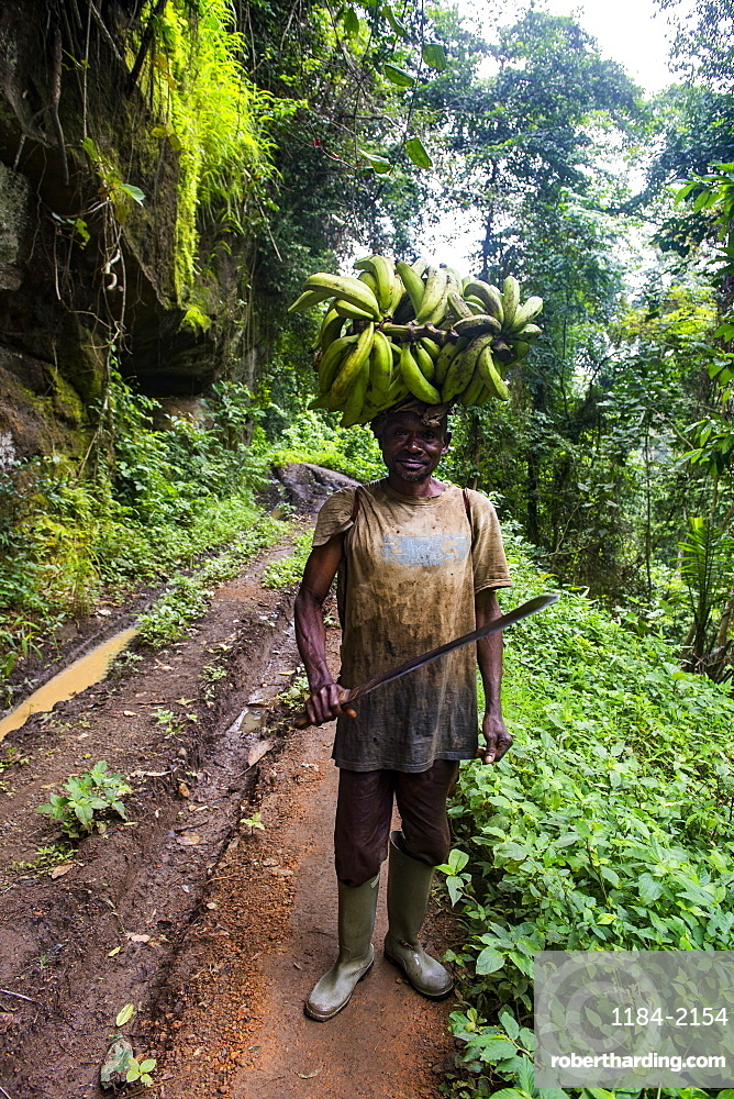 Man carrying a huge plantain on his head, Volcanic lake Barombi, Kumba, southwest Cameroon